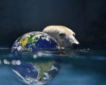 Polar Bear Planet Earth Bear Earth  - davidsenterprises / Pixabay